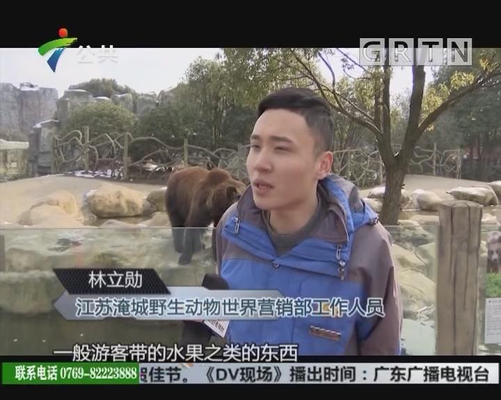 春节逛动物园 游客误把手机喂棕熊