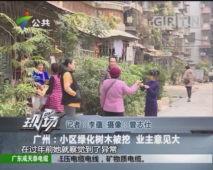 广州:小区绿化树木被挖 业主意见大