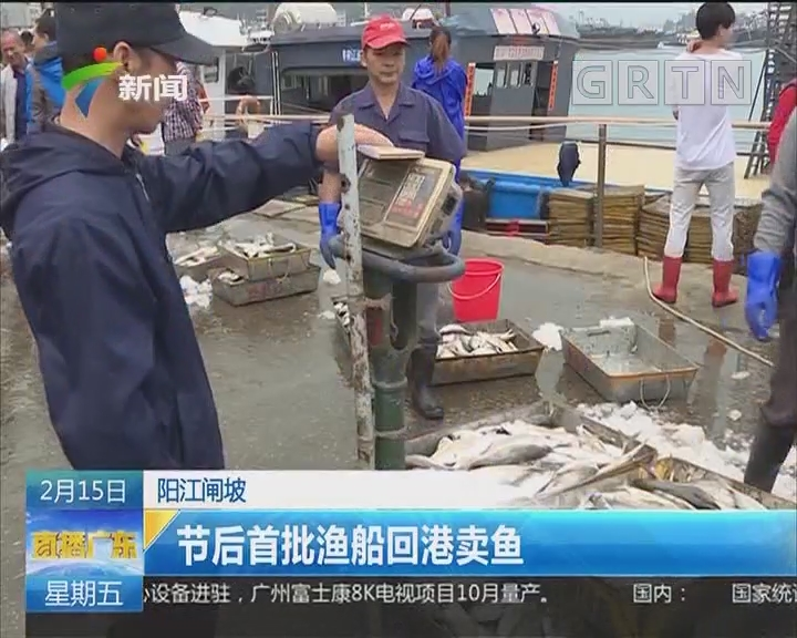 阳江闸坡:节后首批渔船回港卖鱼