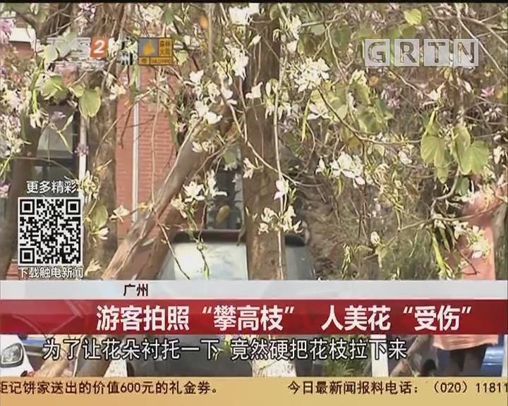 """广州:游客拍照""""攀高枝"""" 人美花""""受伤"""""""