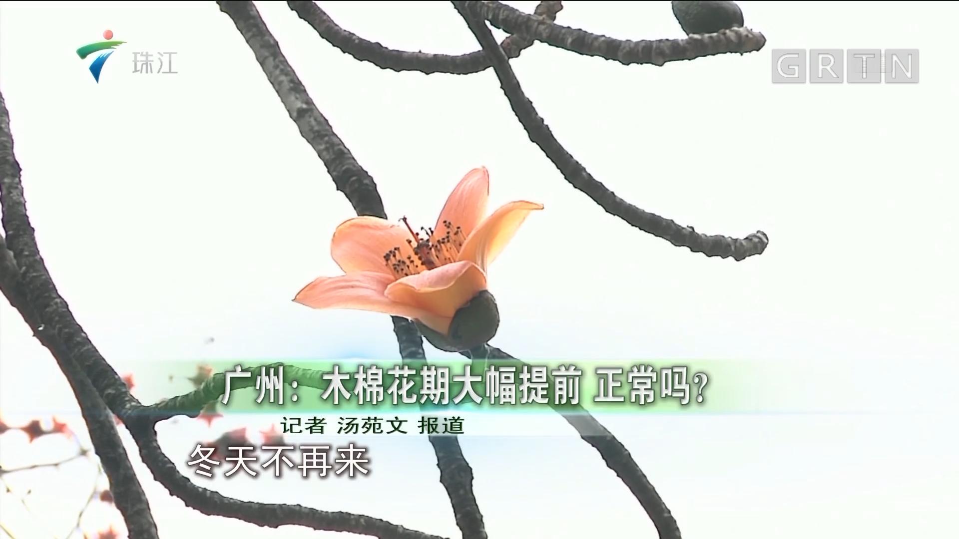 广州:木棉花期大幅提前 正常吗?