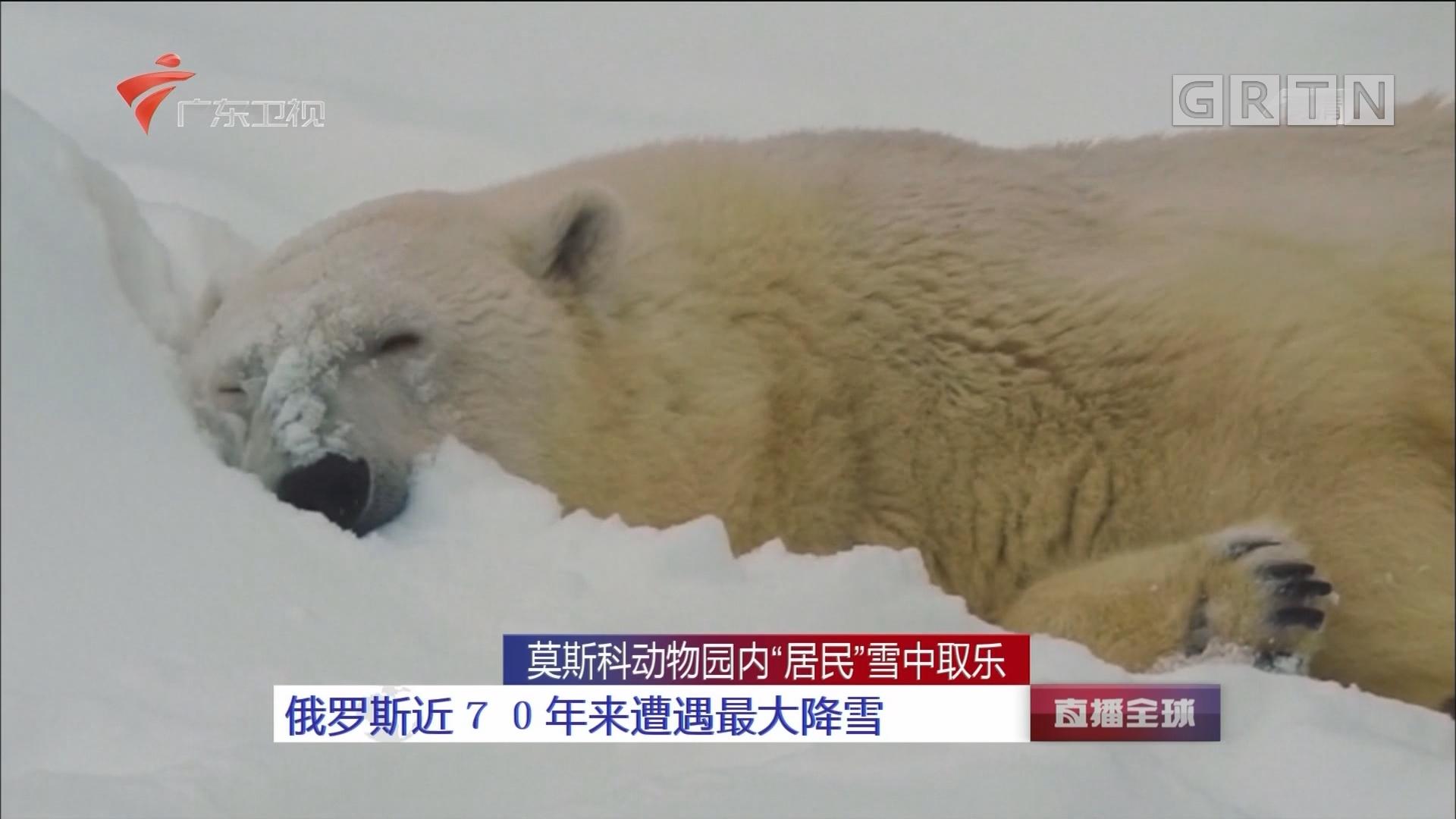 """莫斯科动物园内""""居民""""雪中取乐:俄罗斯近70年来遭遇最大降雪"""