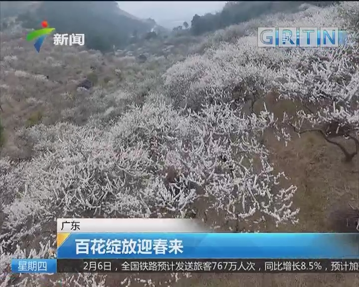 广东:百花绽放迎春来