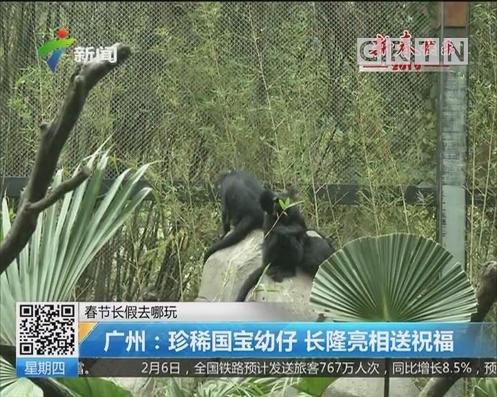 春节长假去哪玩 广州:珍稀国宝幼仔 长隆亮相送祝福