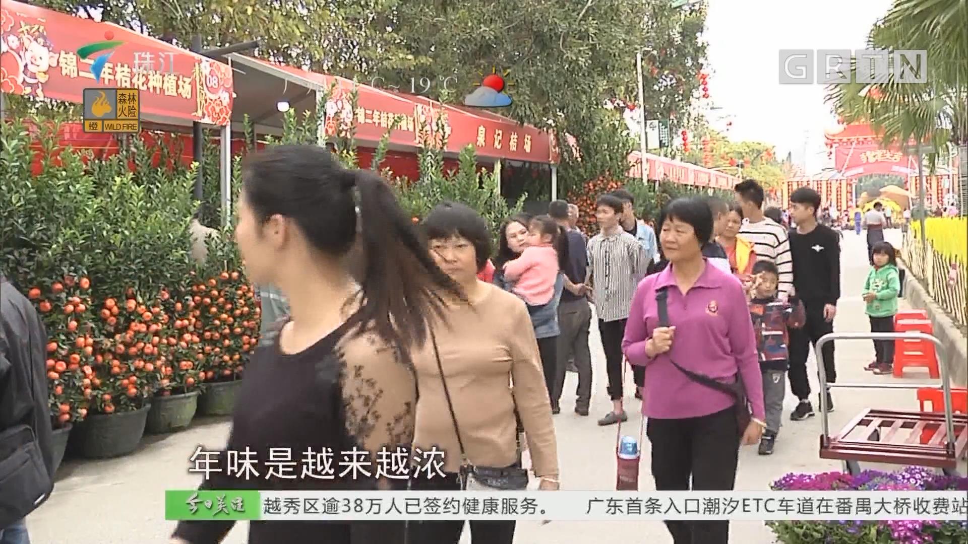 广州:年味渐浓 迎春花市已陆续开市