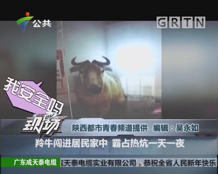 羚牛闯进居民家中 霸占热炕一天一夜