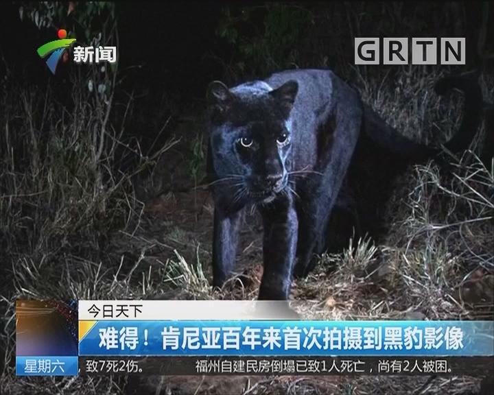 难得!肯尼亚百年来首次拍摄到黑豹影像
