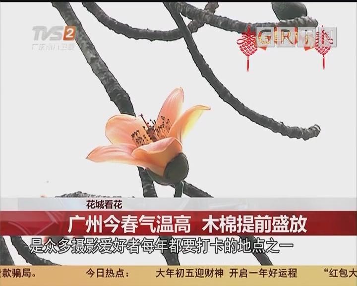 花城看花:广州今春气温高 木棉提前盛放
