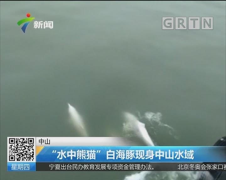 """中山:""""水中熊猫"""" 白海豚现身中山水域"""