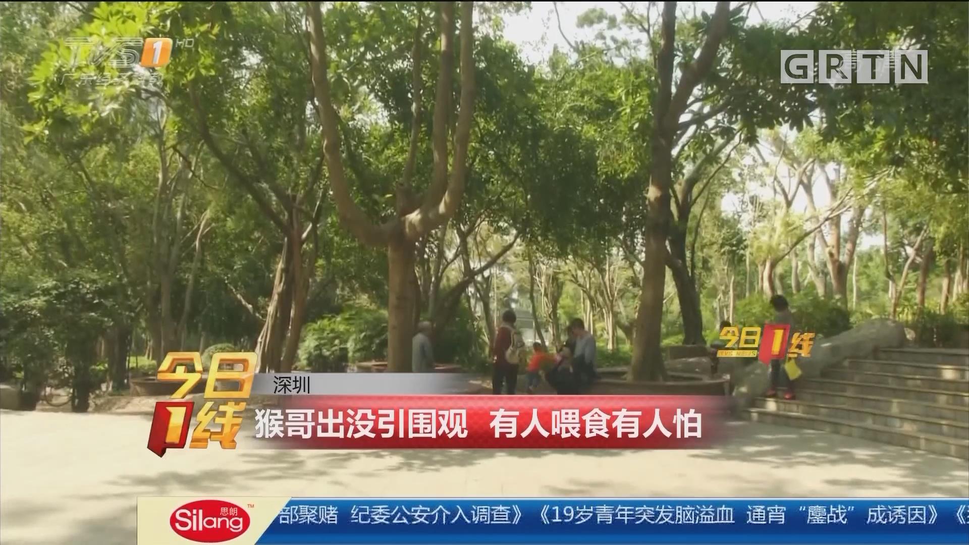 深圳:猴哥出没引围观 有人喂食有人怕