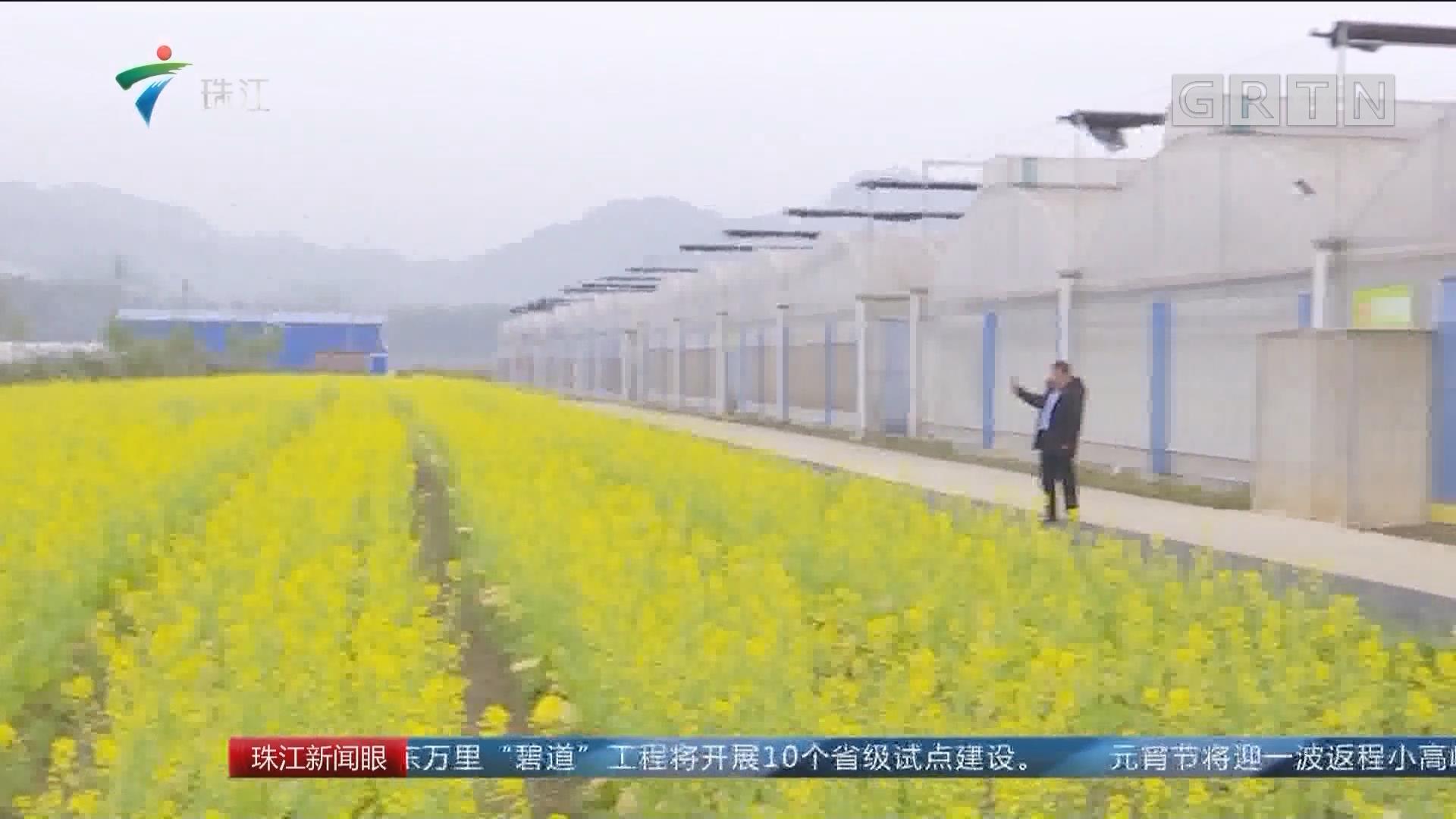 清远:乡村新闻官上线 游客量明显提升