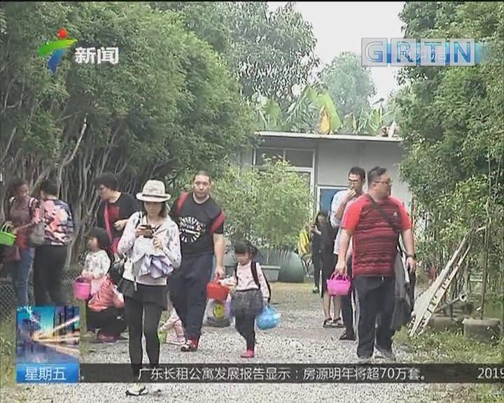 """采摘正当时 顺德北滘""""嘉""""果盛宴"""