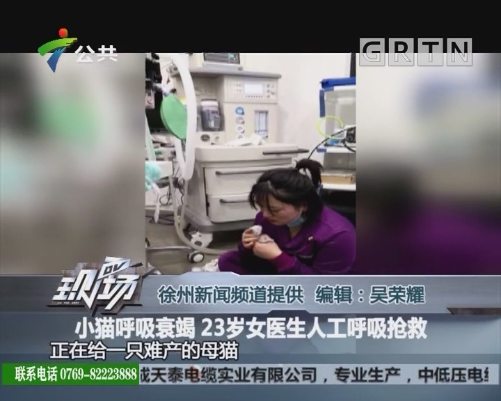 小猫呼吸衰竭 23岁女医生人工呼吸抢救