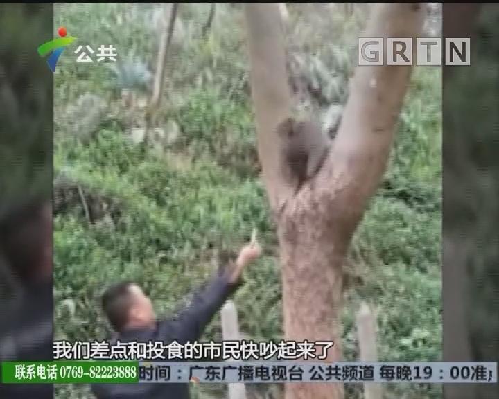 """深圳:""""大圣""""溜入小区伤人 居民试图抓捕失败"""