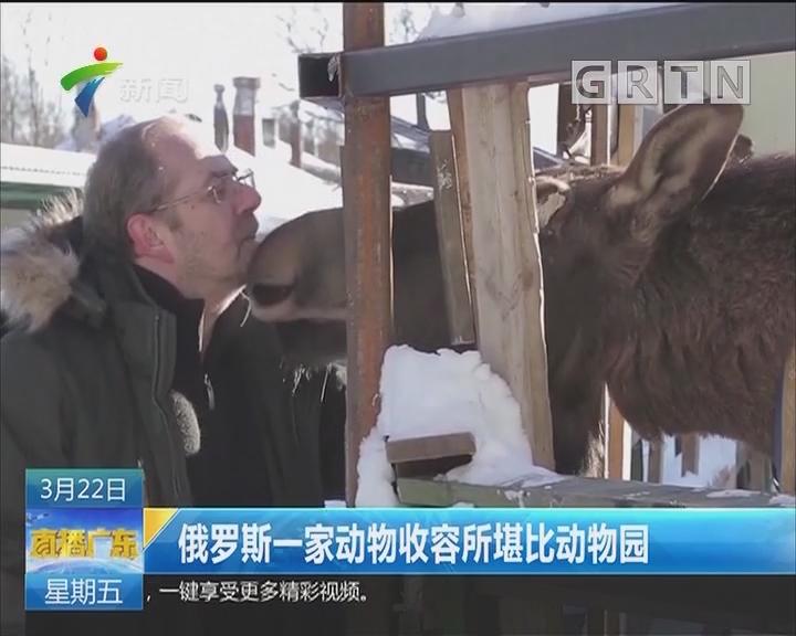 俄罗斯一家动物收容所堪比动物园