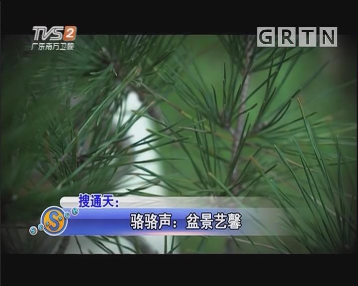 骆骆声:盆景艺馨