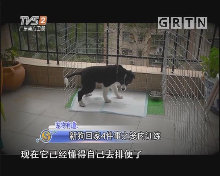 宠物有道:新狗回家4件事之笼内训练
