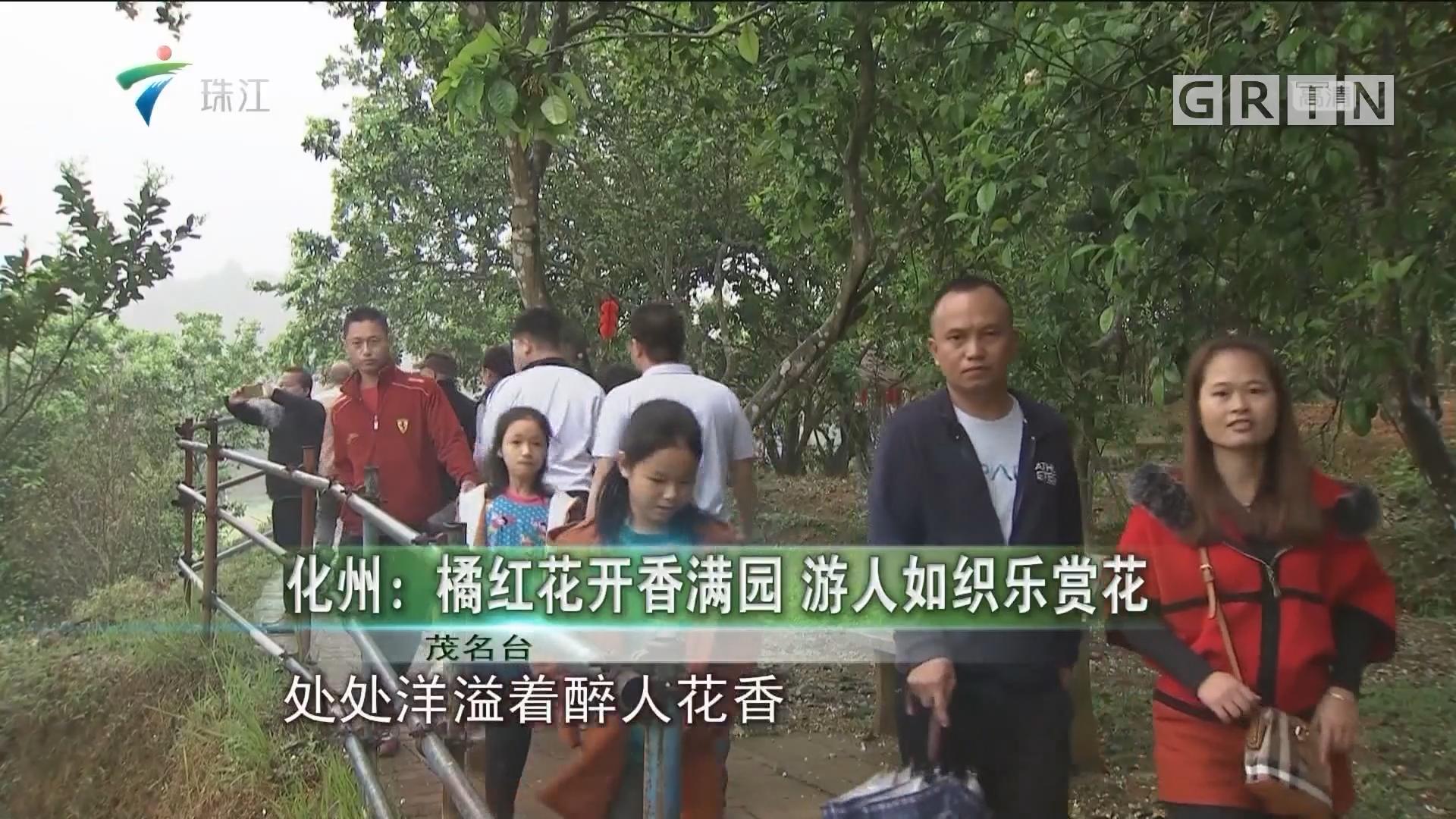 化州:橘红花开香满园 游人如织乐赏花