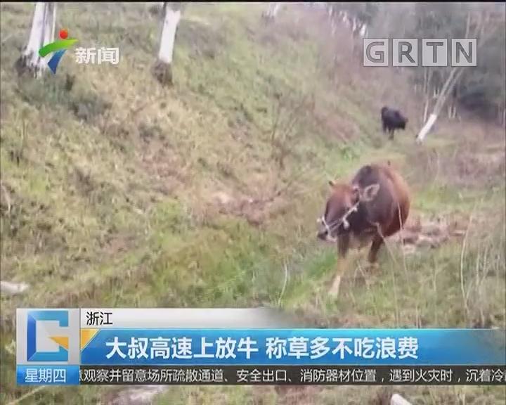 浙江:大叔高速上放牛 称草多不吃浪费