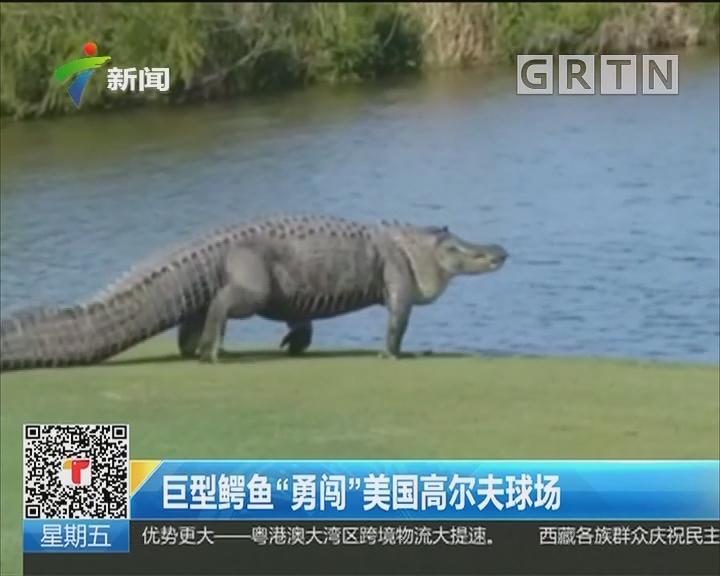 """巨型鳄鱼""""勇闯""""美国高尔夫球场"""