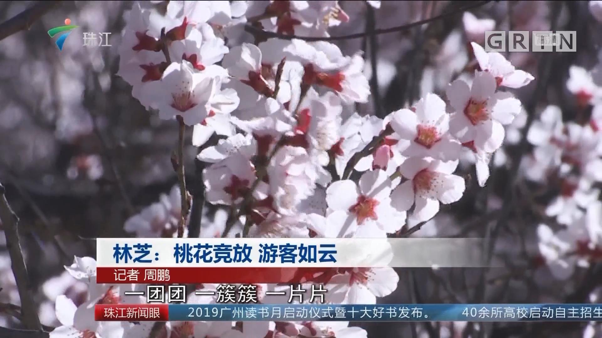林芝:桃花竞放 游客如云