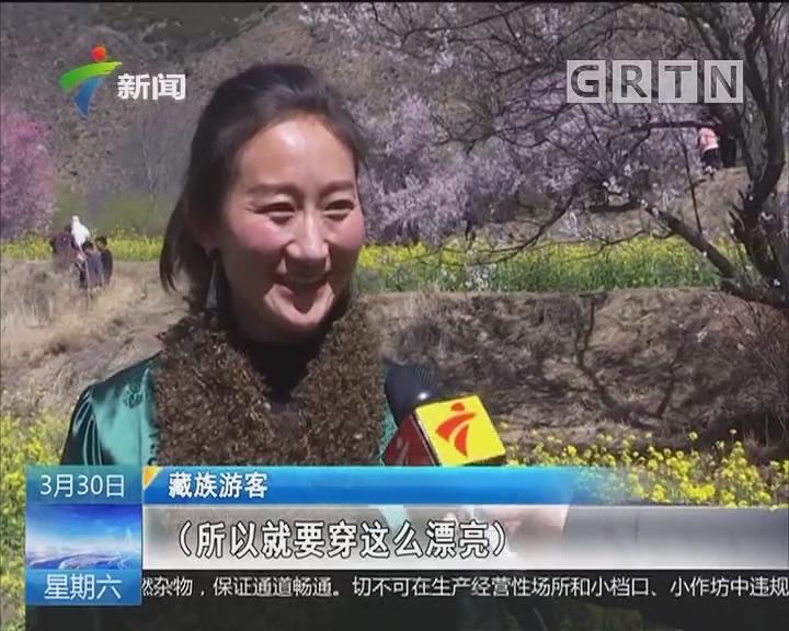 林芝桃花节:最美的春天来自这里