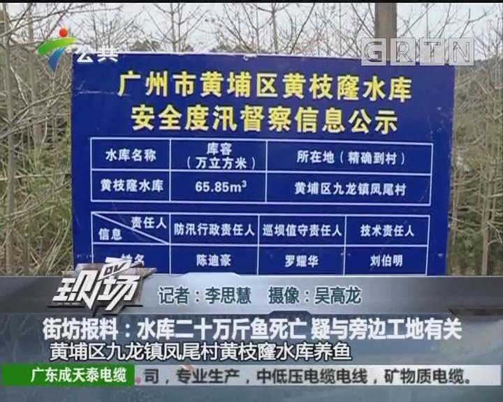 街坊报料:水库二十万斤鱼死亡 疑与旁边工地有关