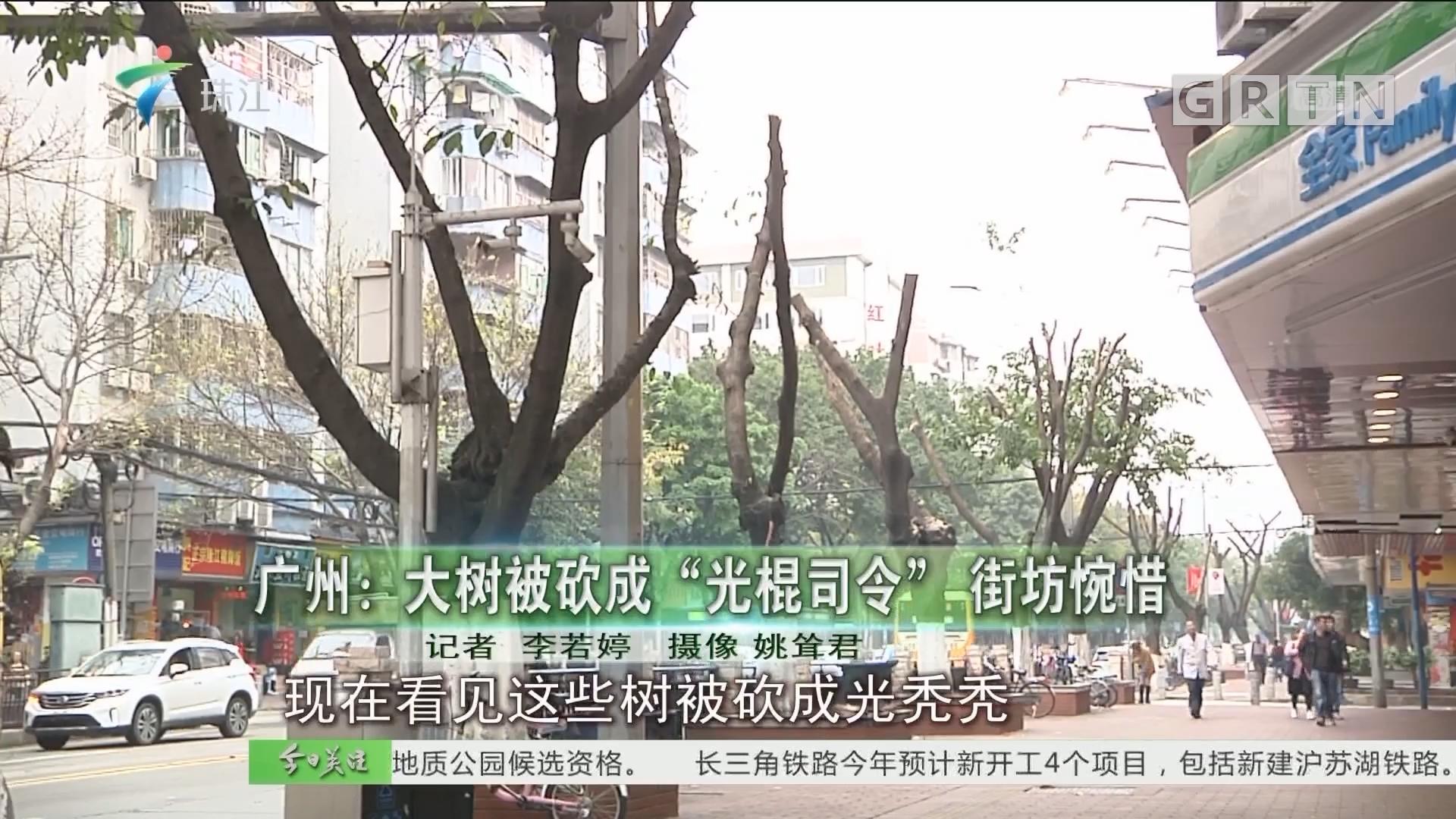 """广州:大树被砍成""""光棍司令"""" 街坊惋惜"""