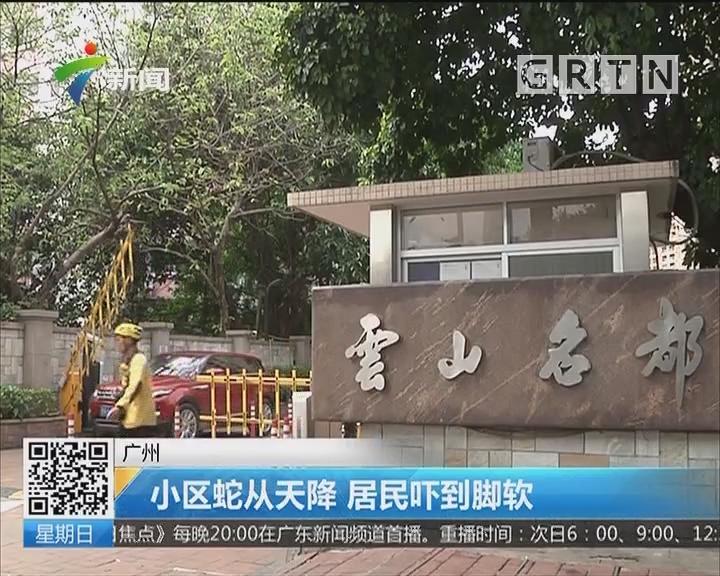 广州:小区蛇从天降 居民吓到脚软