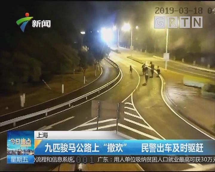 """上海:九匹骏马公路上""""撒欢"""" 民警出车及时驱赶"""