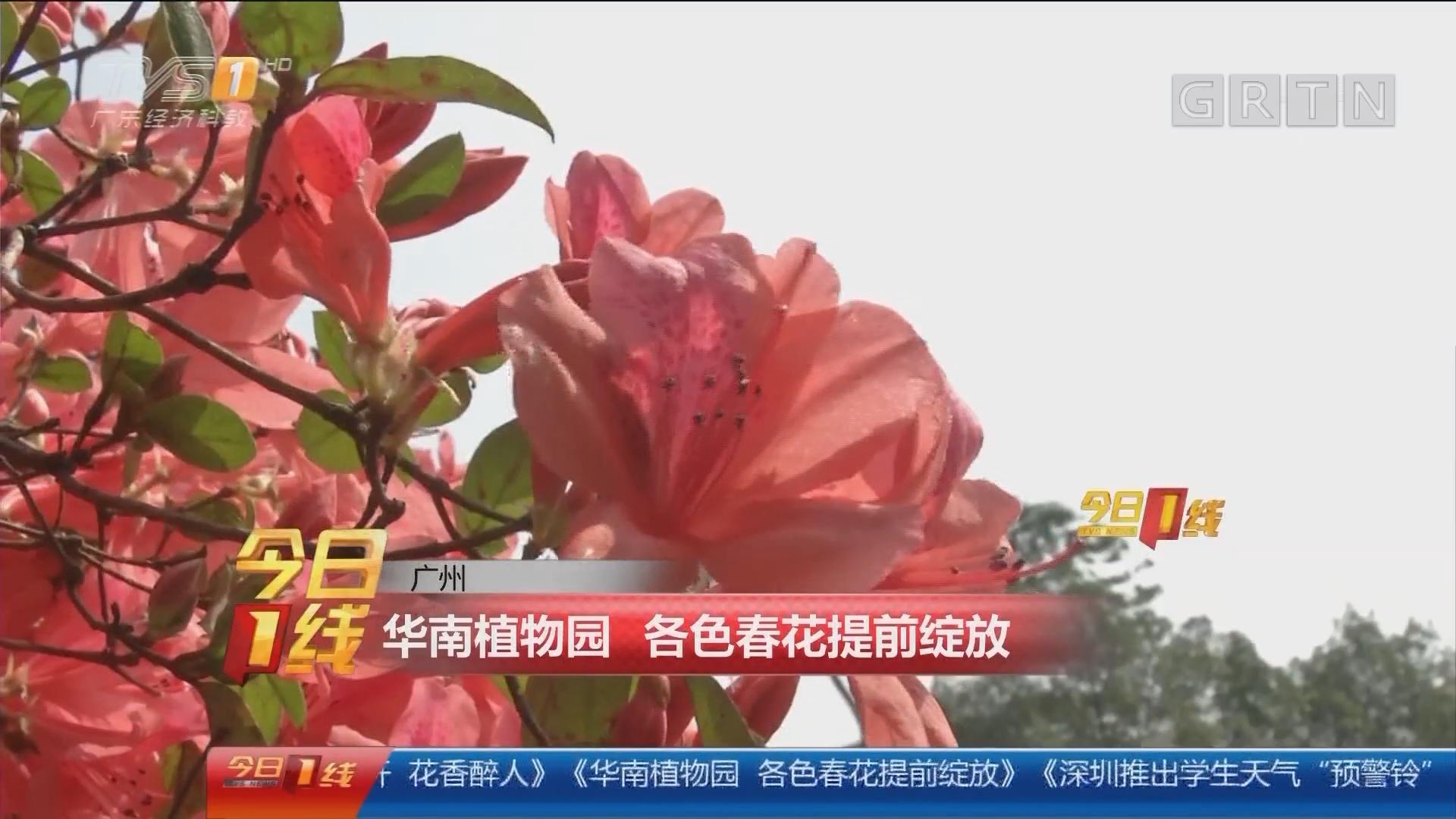 广州:华南植物园 各色春花提前绽放