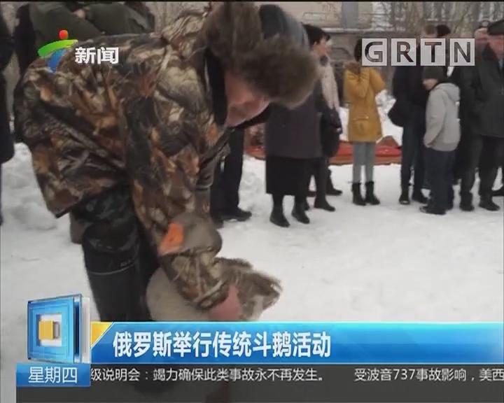 俄罗斯举行传统斗鹅活动