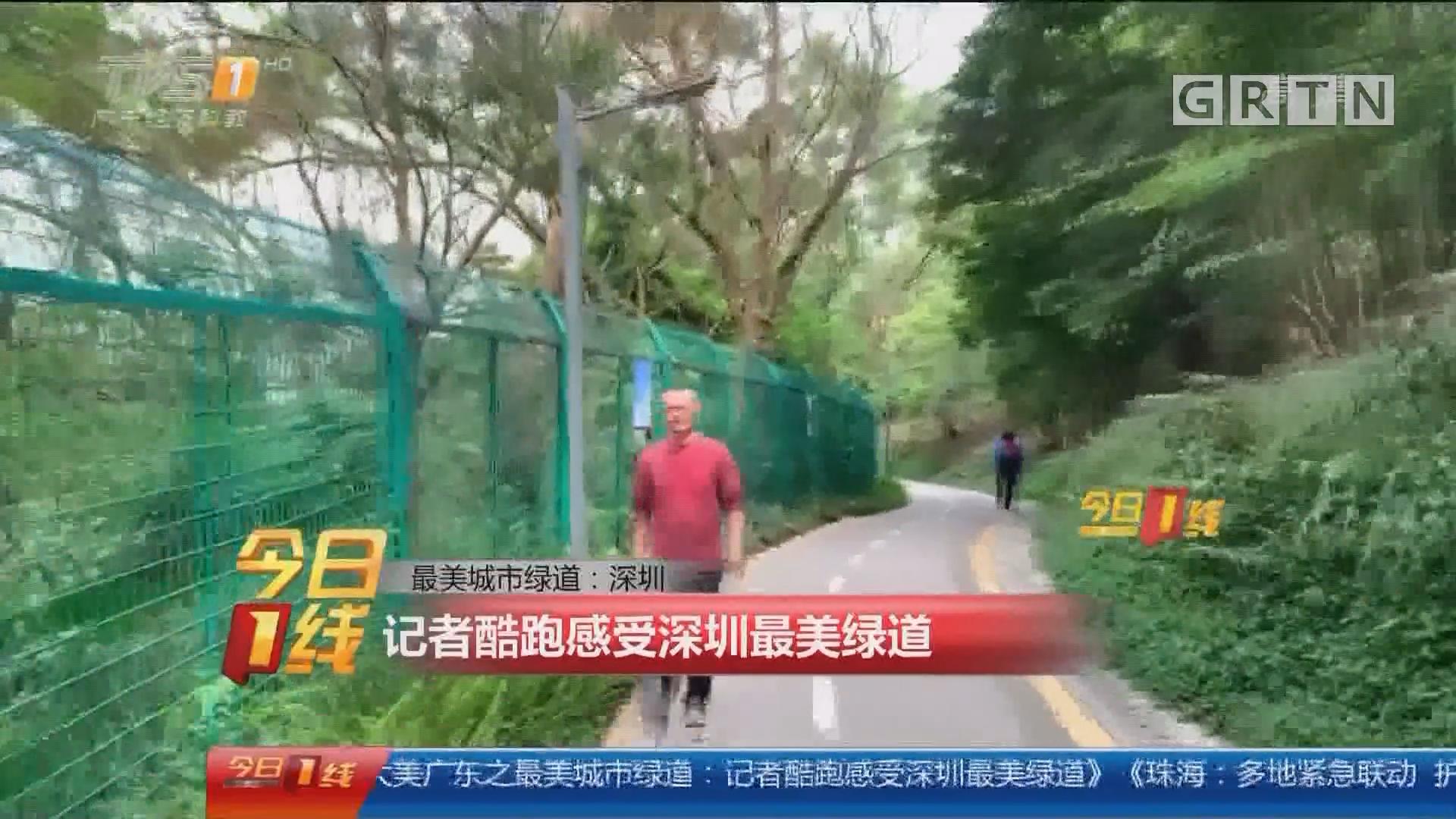 最美城市绿道:深圳 记者酷跑感受深圳最美绿道