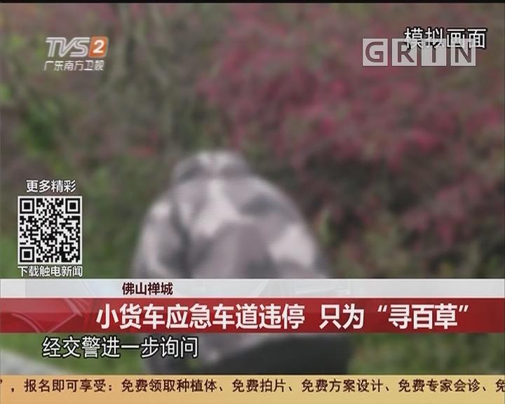 """佛山禅城:小货车应急车道违停 只为""""寻百草"""""""