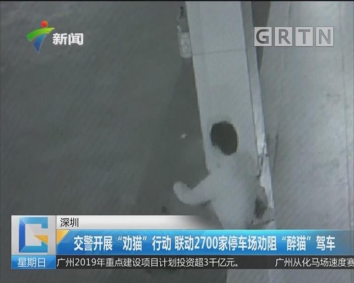 """深圳:交警开展""""劝猫""""行动 联动2700家停车场劝阻""""醉猫""""驾车"""