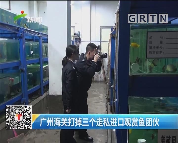 广州海关打掉三个走私进口观赏鱼团伙