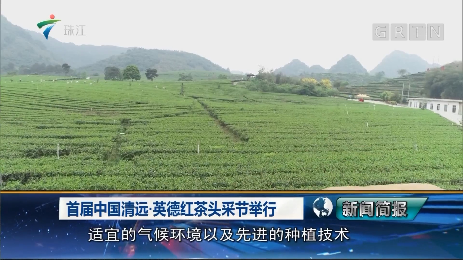 首届中国清远·英德红茶头采节举行