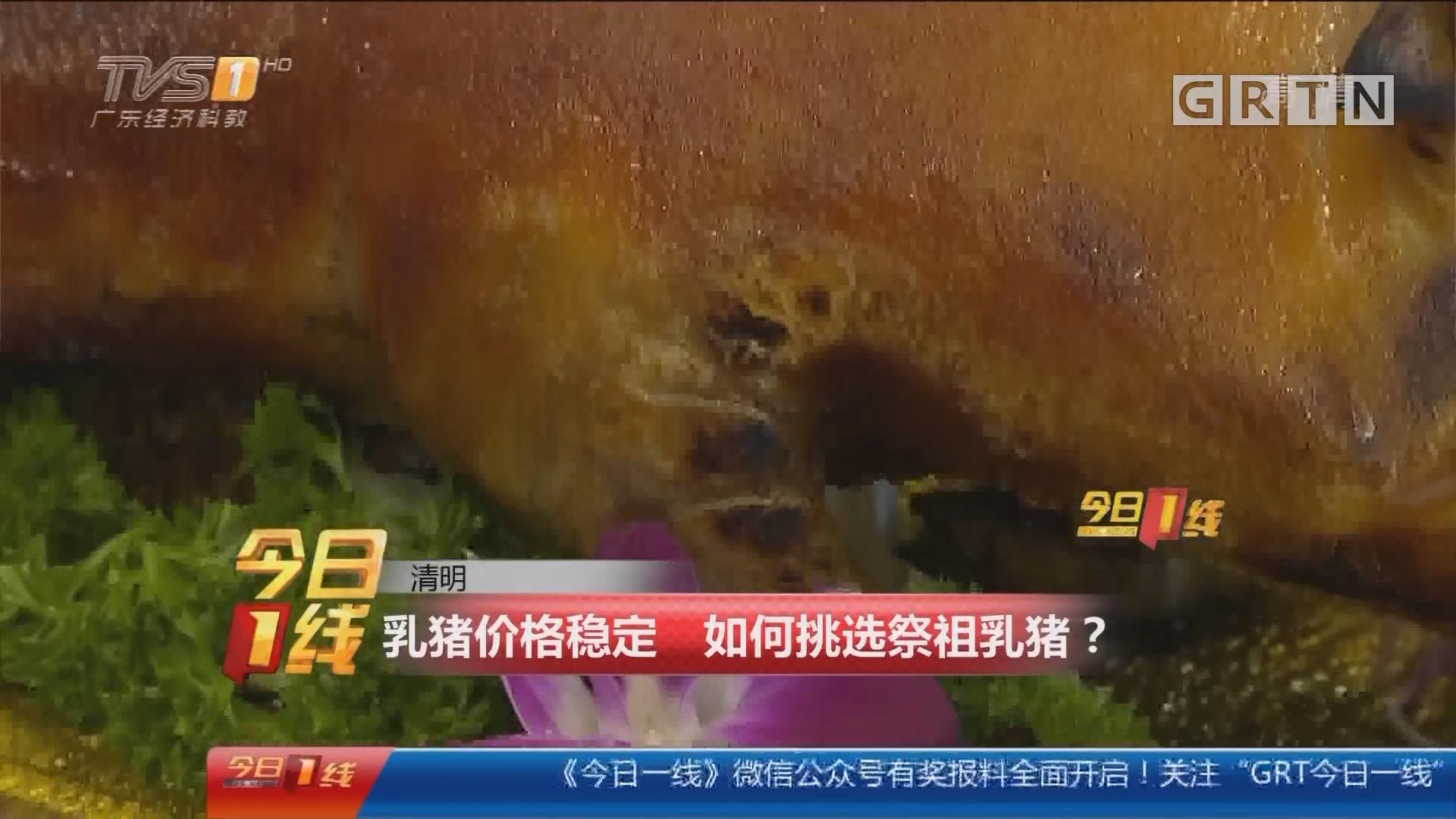 清明:乳猪价格稳定 如何挑选祭祖乳猪?
