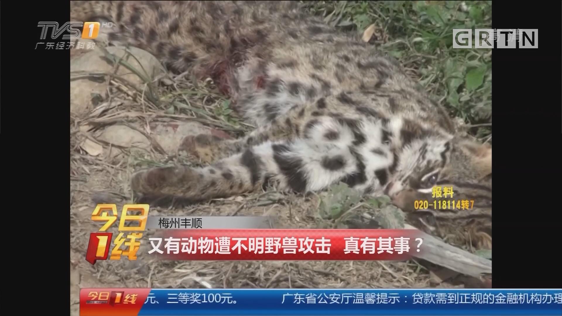 梅州丰顺:又有动物遭不明野兽攻击 真有其事?