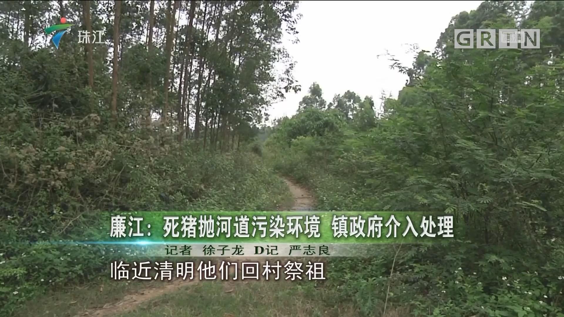 廉江:死猪抛河道污染环境 镇政府介入处理