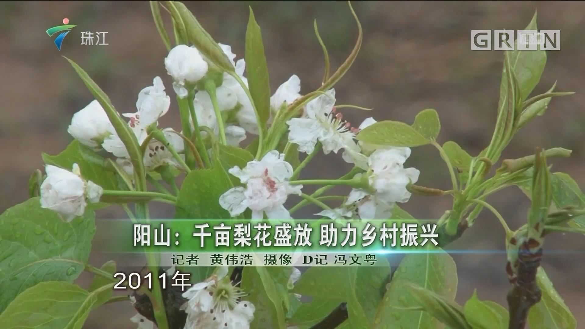 阳山:千亩梨花盛放 助力乡村振兴