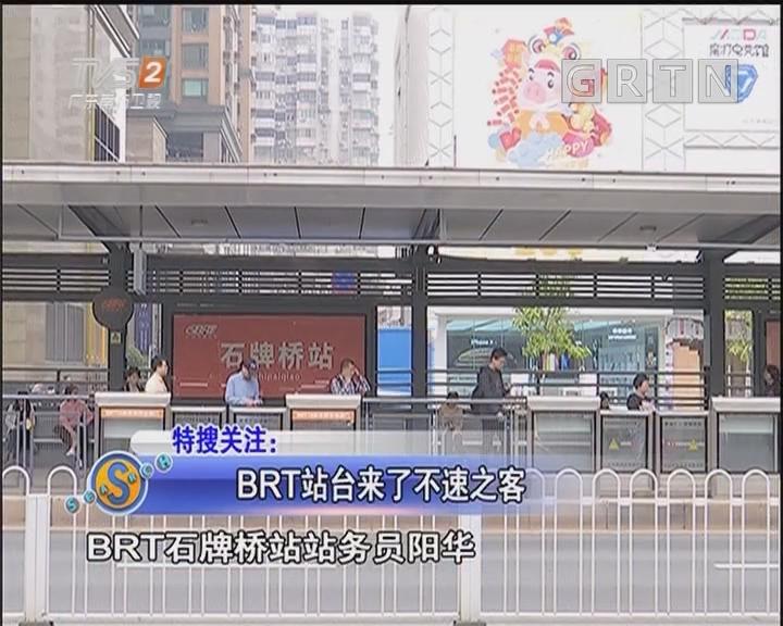 BRT站台来了不速之客