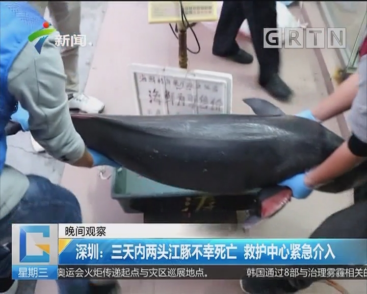 深圳:三天内两头江豚不幸死亡 救护中心紧急介入