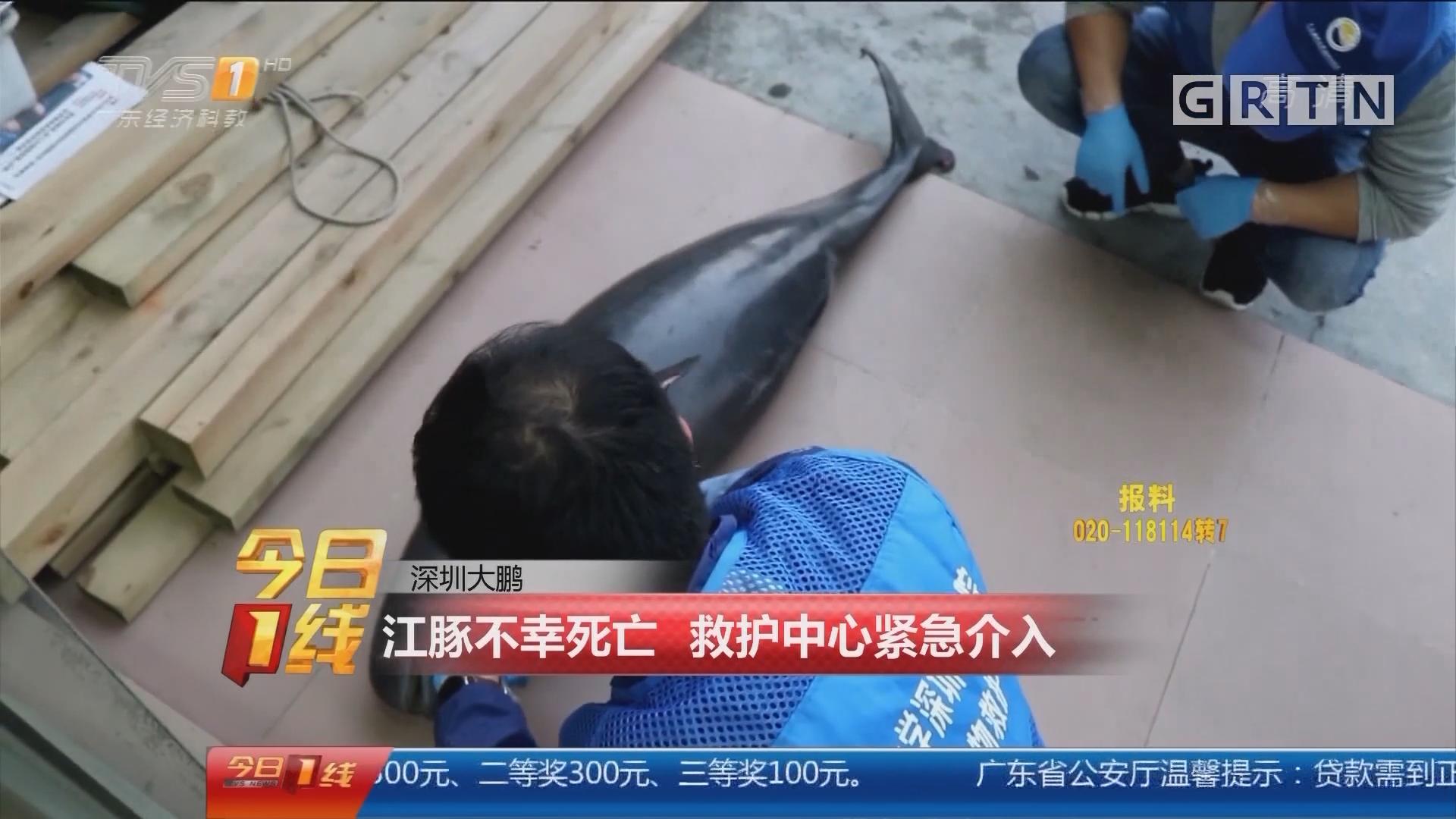 深圳大鹏:江豚不幸死亡 救护中心紧急介入
