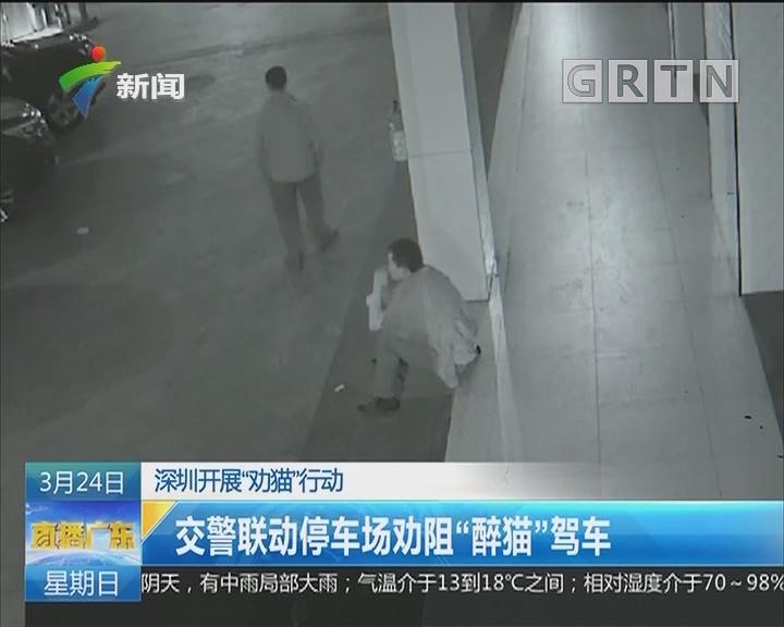 """深圳开展""""劝猫""""行动:交警联动停车场劝阻""""醉猫""""驾车"""