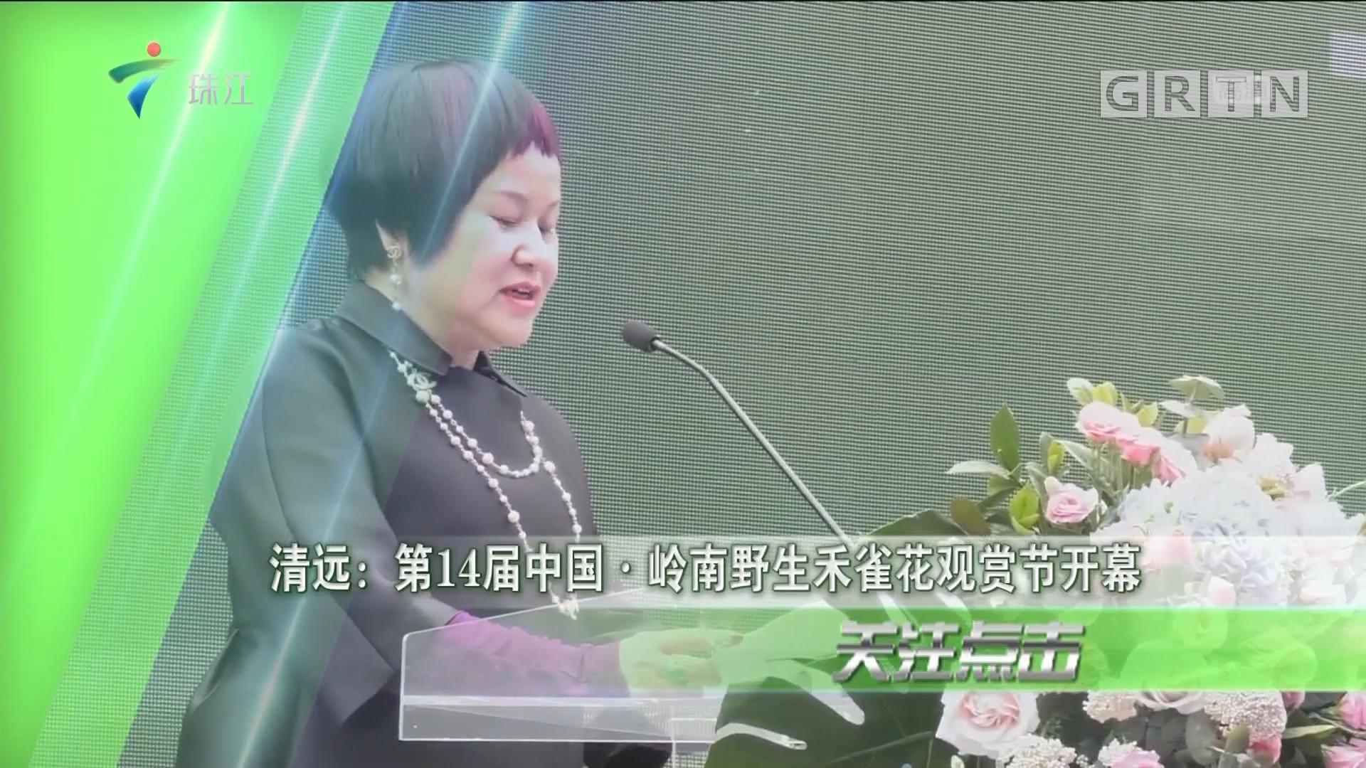 清远:第14届中国·岭南野生禾雀花观赏节开幕