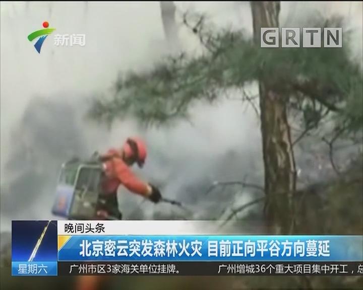 北京密云突发森林火灾 目前正向平谷方向蔓延