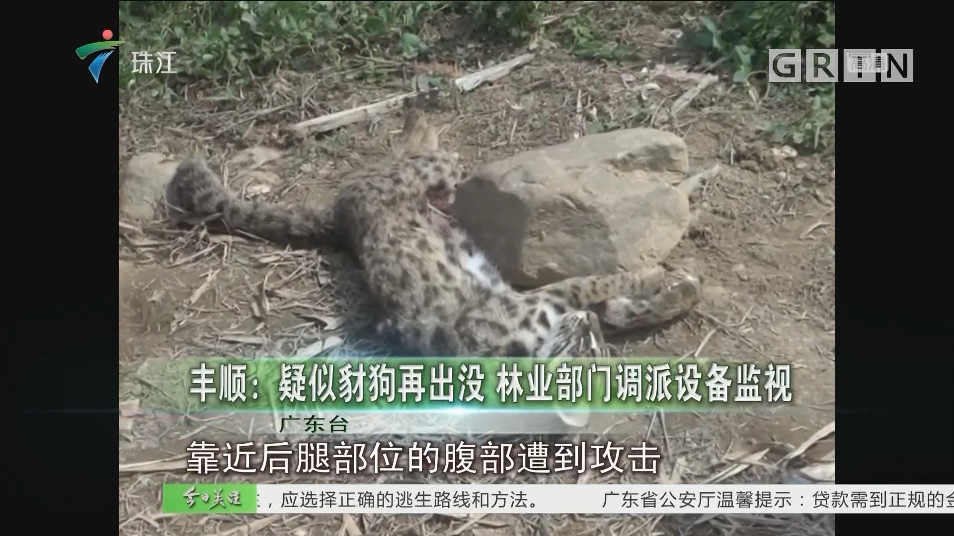 丰顺:疑似豹狗再出没 林业部门调派设备监视