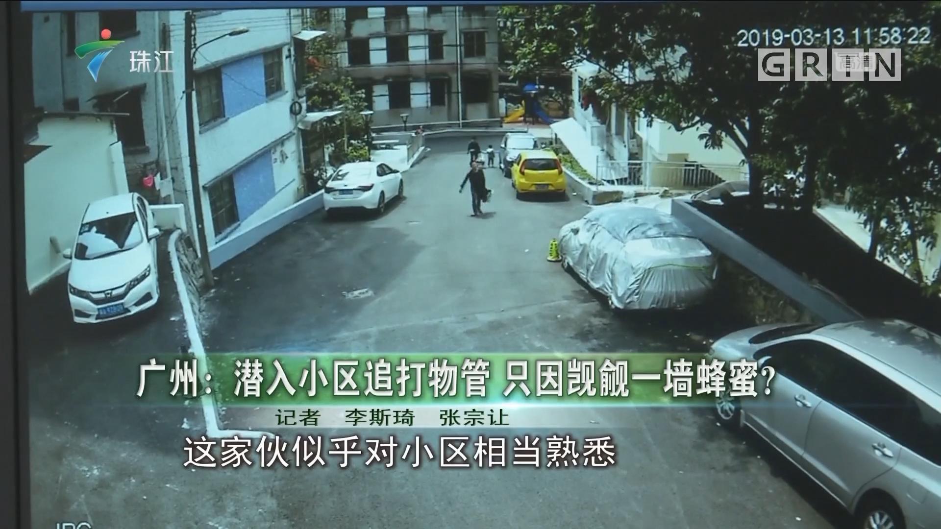 广州:潜入小区追打物管 只因觊觎一墙蜂蜜?