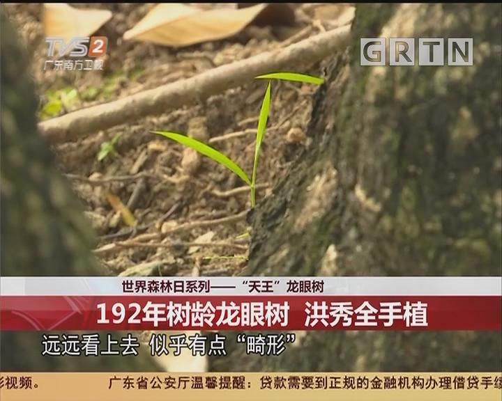 """世界森林日系列——""""天王""""龙眼树:192年树龄龙眼树 洪秀全手植"""